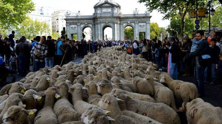 2.000 ovejas en el centro de Madrid