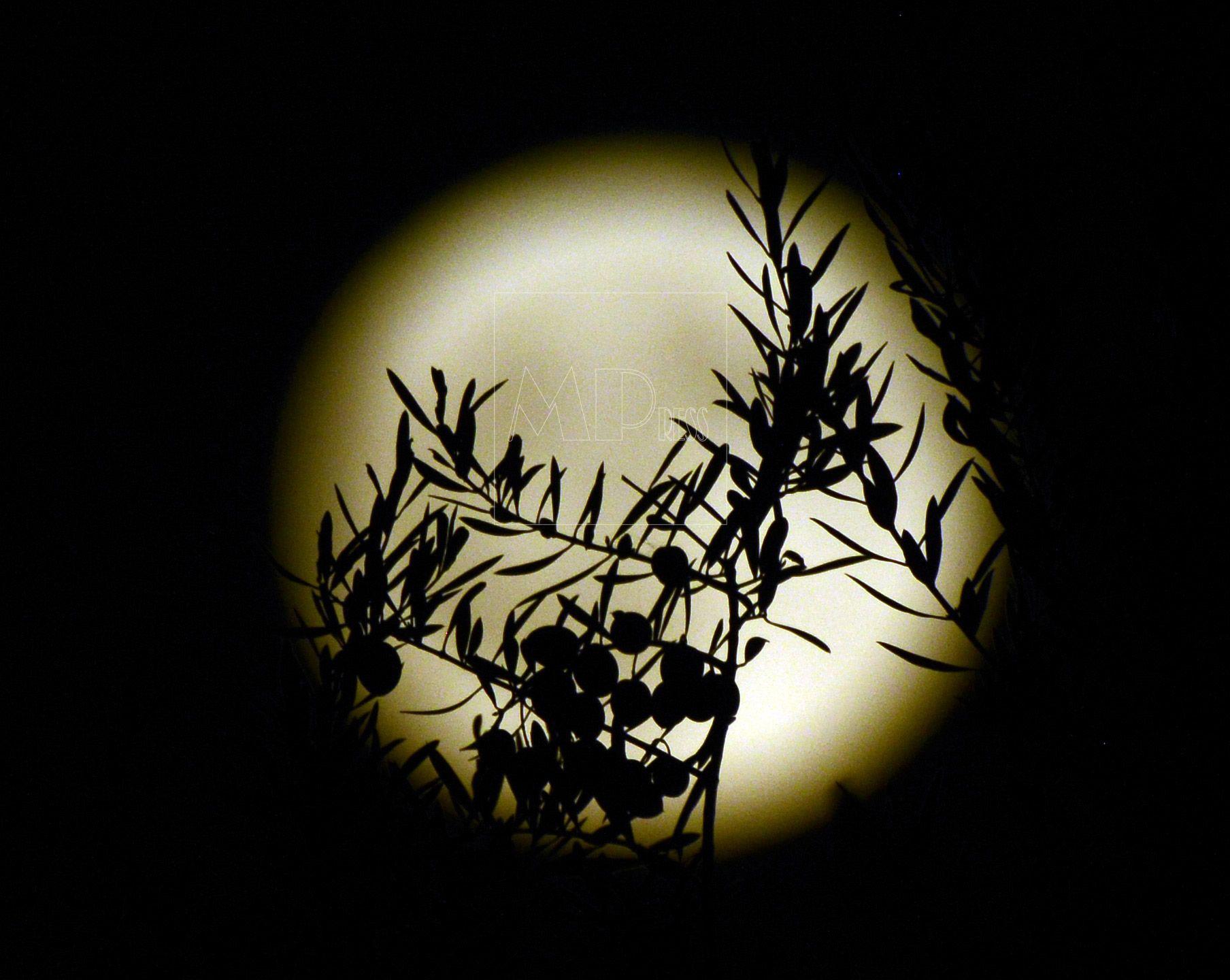 La luna ilumina las olivas en Cebolla, toledo