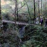 Bosque en los municipios de Ibias y Degaña