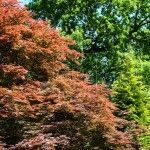Jardines de Sheffield Park Inglaterra
