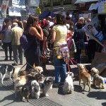 15 M Concentracion en la Puerta del Sol de Madrid