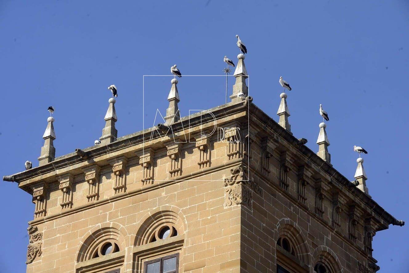Ocho picos de la Diputacion de Soria para ocho Cigueñas.